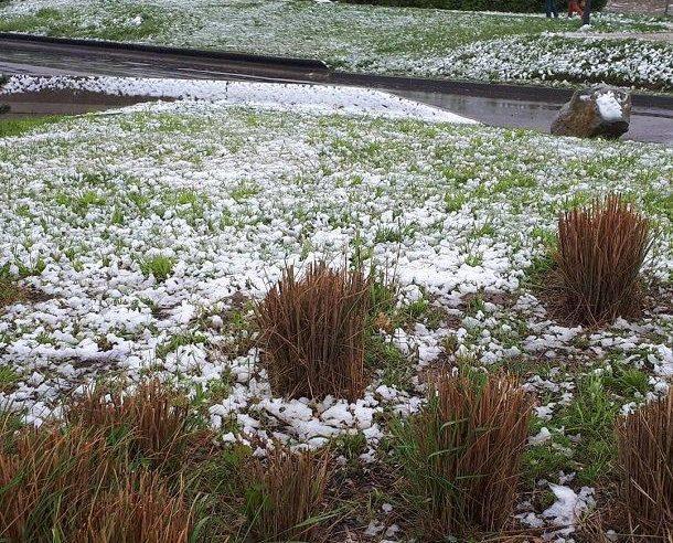 """Результат пошуку зображень за запитом """"У Франції випав сніг"""""""