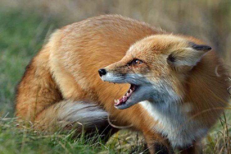 """Результат пошуку зображень за запитом """"фото диких тварин"""""""